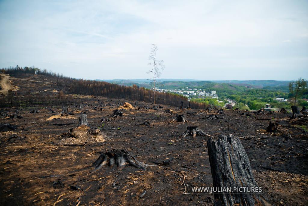 Waldbrand Hömerich